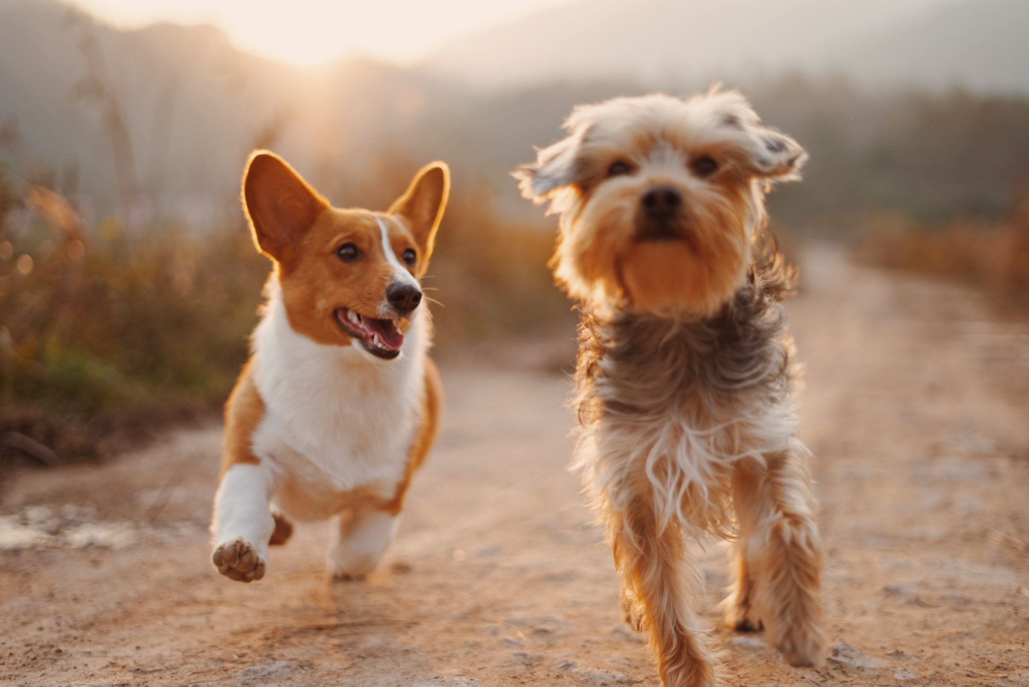 pet-friendly-bend-off-leash-areas