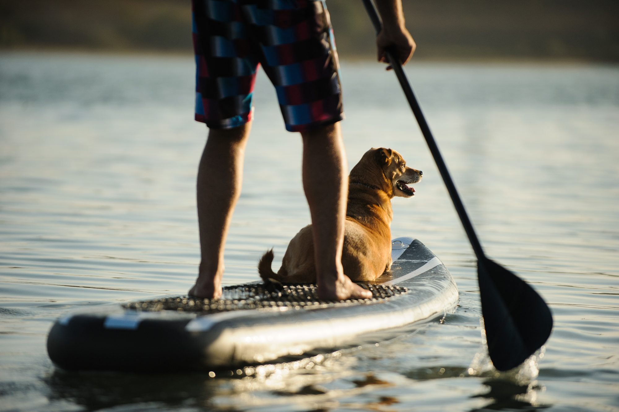 SUP with dog on Deschutes River in Bend