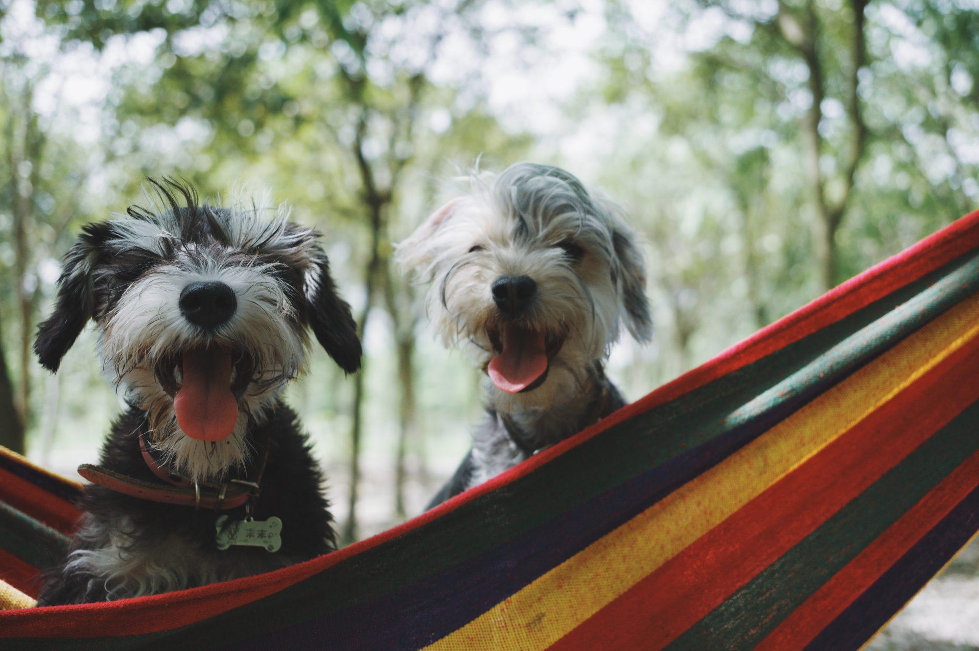 dog-daycare-bend-oregon
