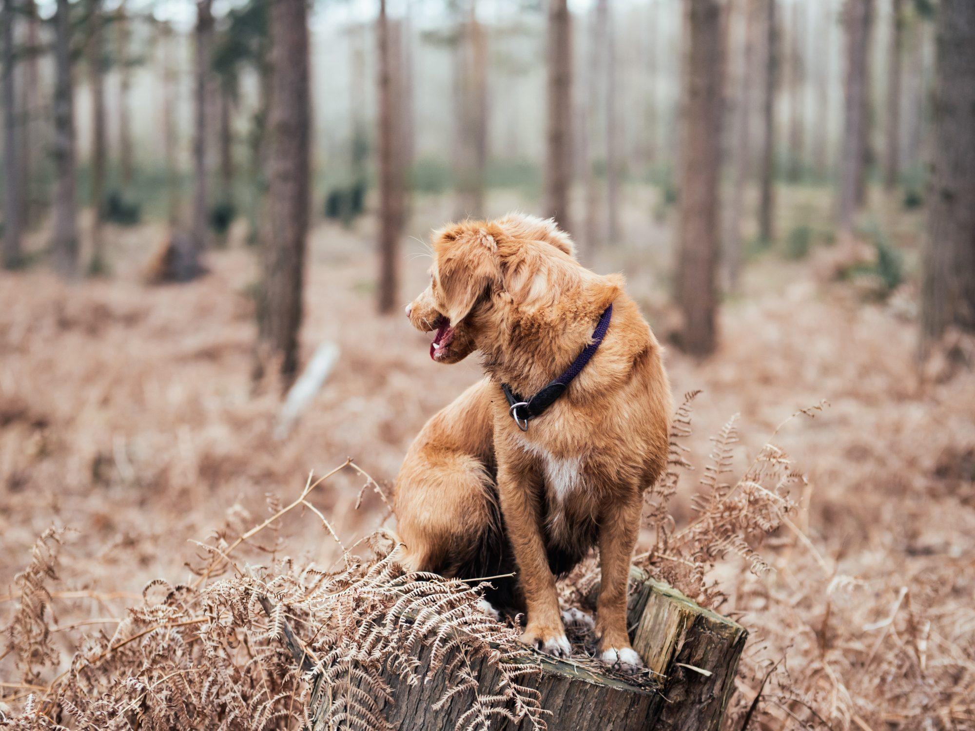 dog-friendly-hiking-trails-near-bend