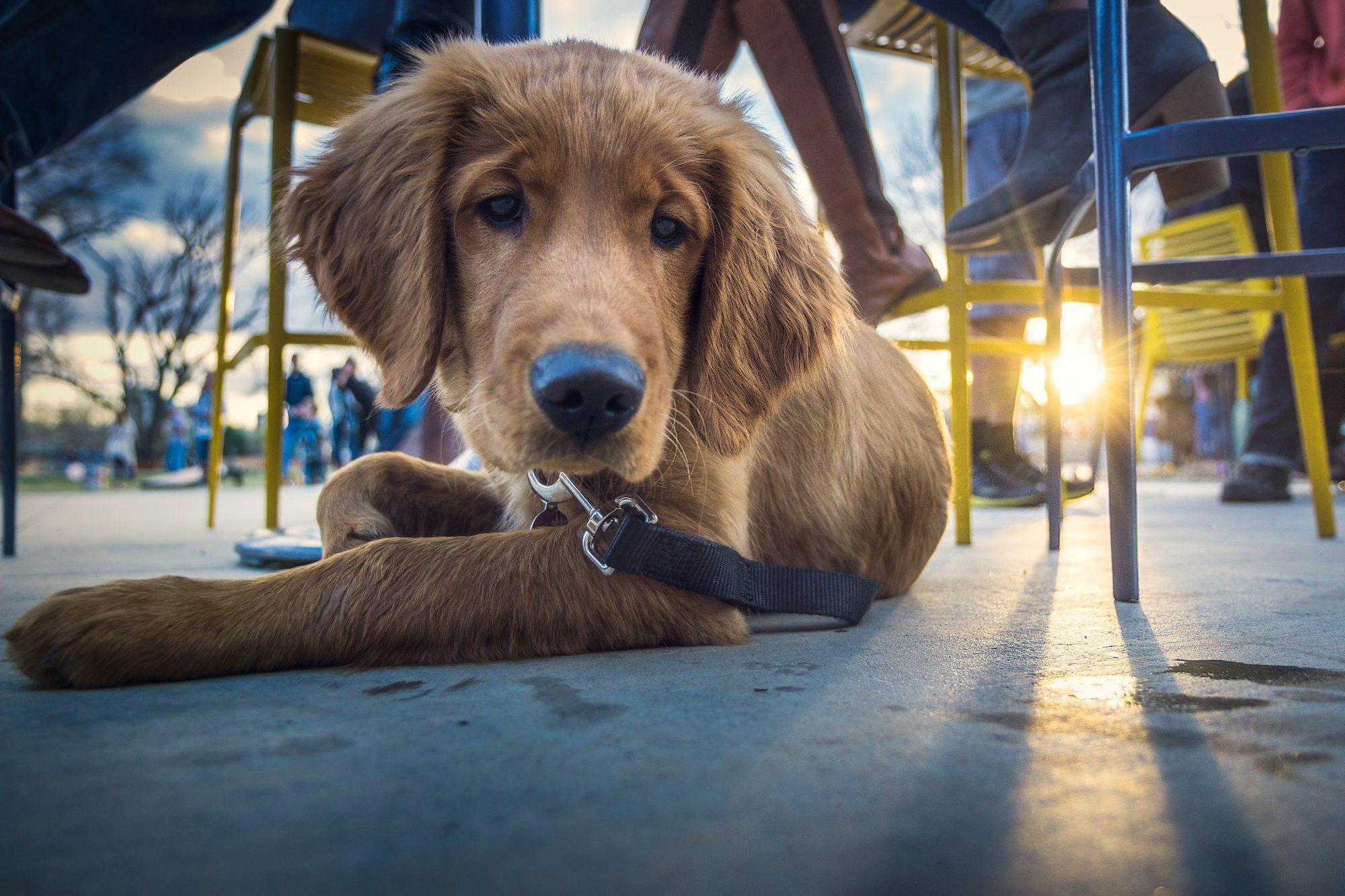 dog-friendly-restaurant-patio-bend-oregon