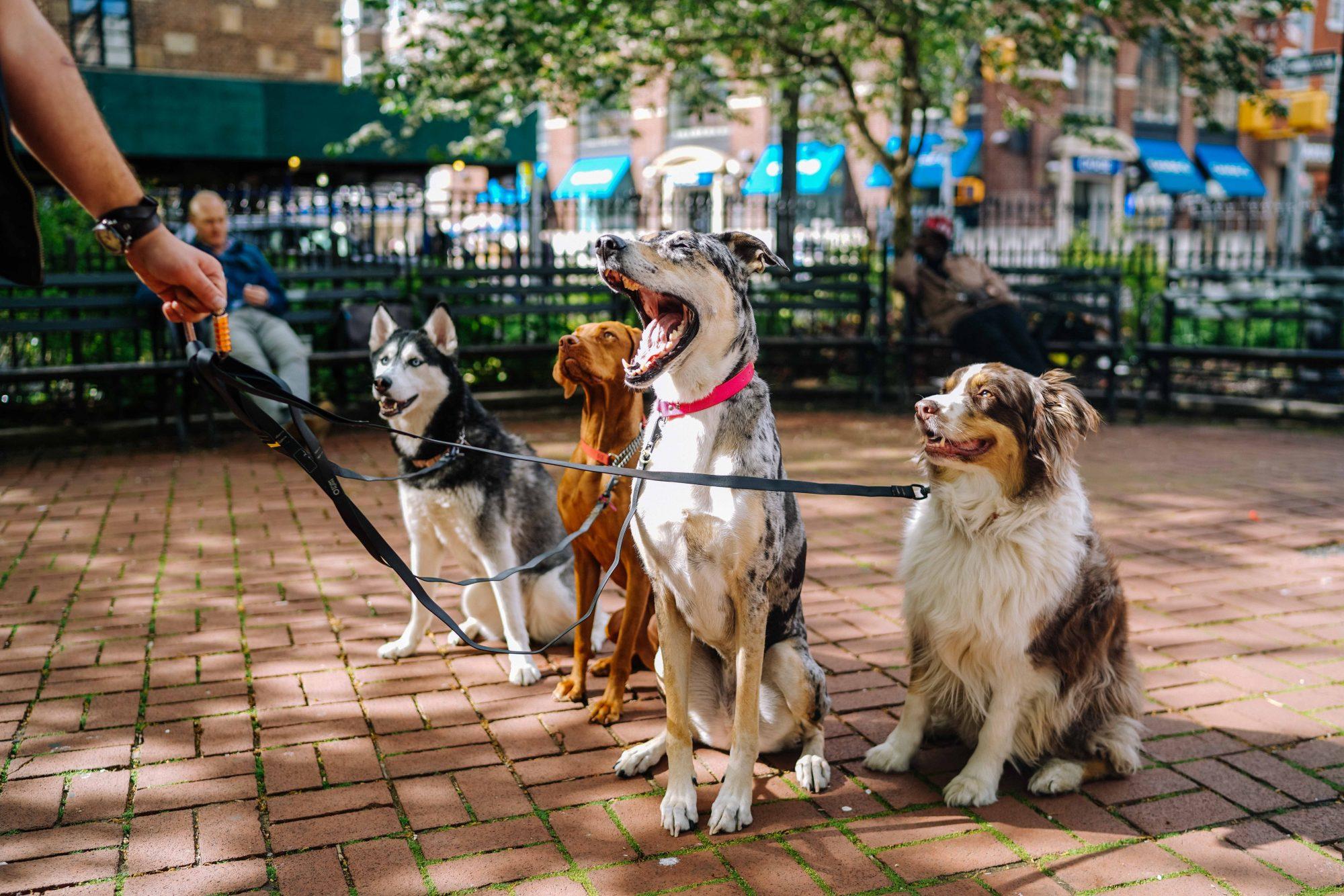 dog off leash rules