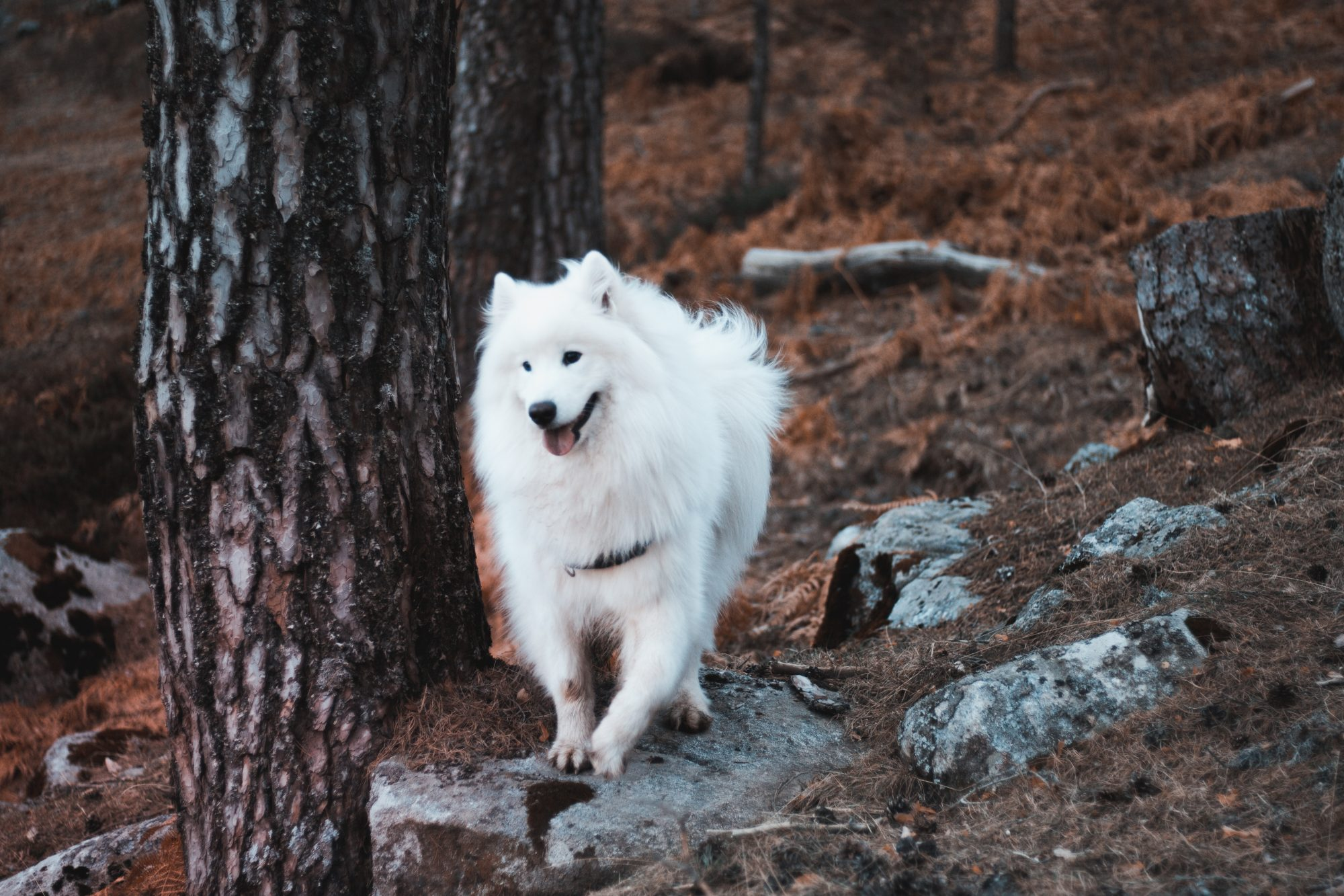 hiking the trails in Bend with a dog