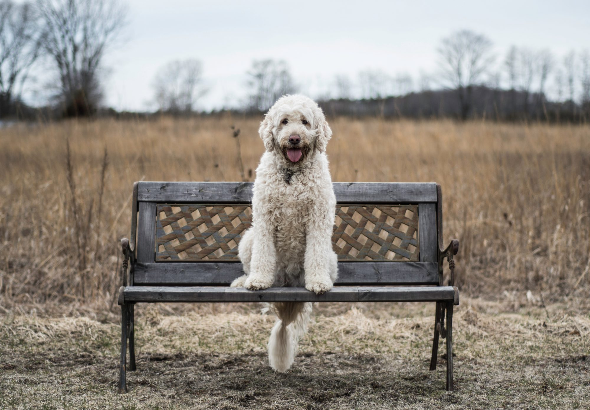 off leash dog parks in bend - park bench