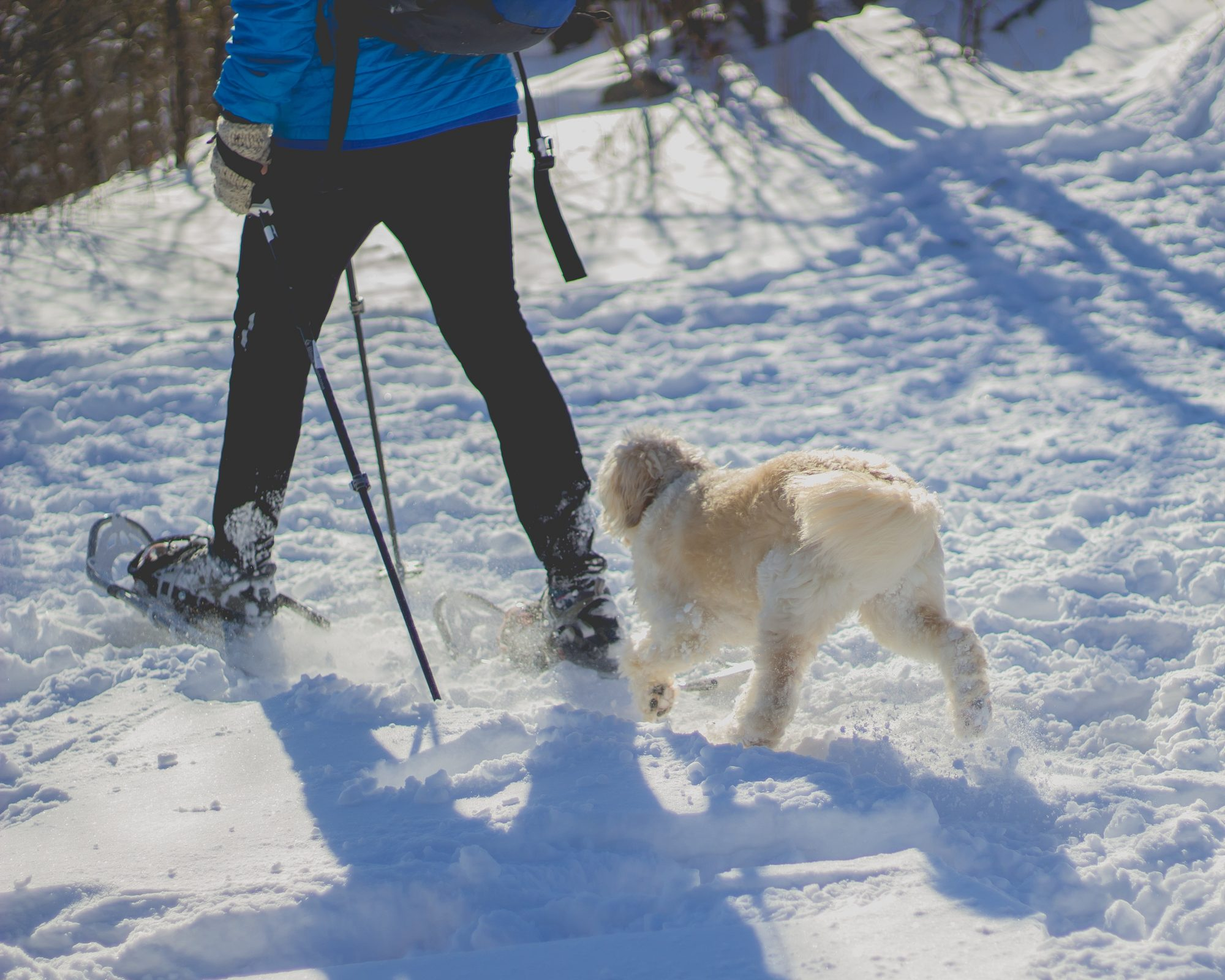 snowshoeing-with-dog-bend-or