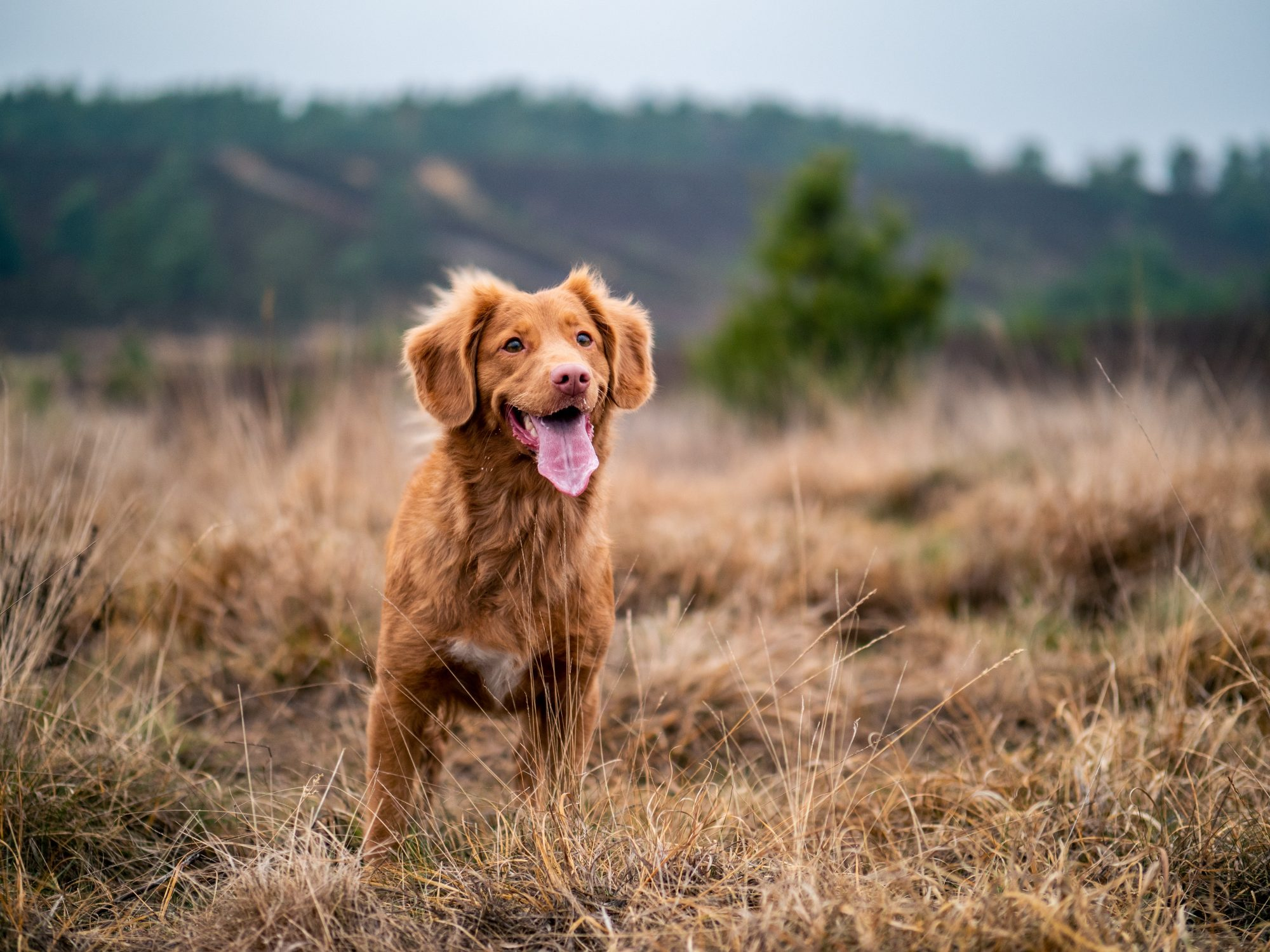 things-to-do-with-dog-in-bend-pet-friendly