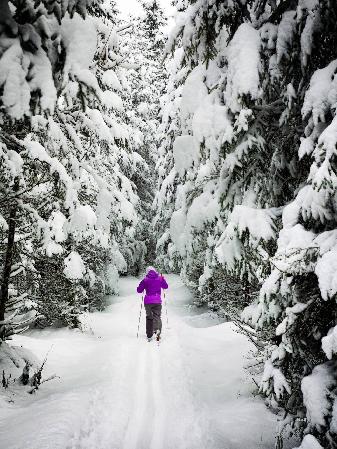 woman in purple jacket cross country skiingin bend