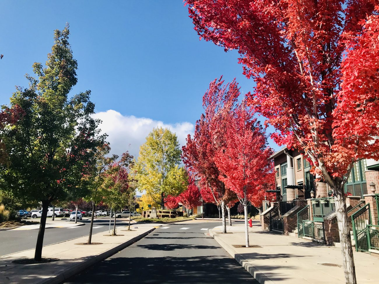 fall-foliage-in-bend
